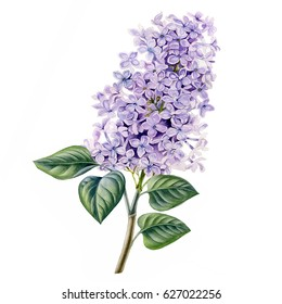 Watercolor hand painted lilac flowers. Can be used as romantic background for web pages, wedding invitations, greeting cards, postcards, patterns, prints, textile design, package design, wallpapers.