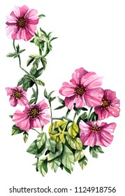 Watercolor hand painted petunia flower. Can be used as romantic background for wedding invitations, greeting cards