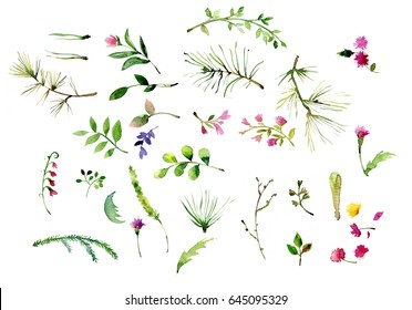 Watercolor herbal set for card design. Hand painted floral objects isolated on white background.