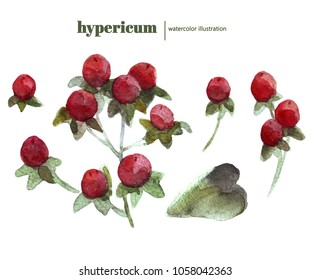 watercolor hypericum set