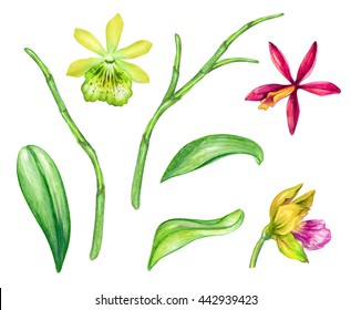 watercolor illustration, assorted orchid flowers and green leaves, floral design elements set, isolated on white background