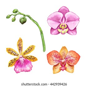 watercolor illustration, assorted orchid flowers, floral design elements set, isolated on white background