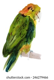 Watercolor illustration of a bird parrot