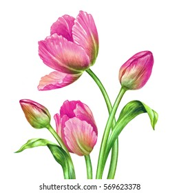 watercolor illustration, botanical art, fresh spring tulips, floral background, beautiful bouquet of wild flowers