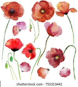 Watercolor illustration of botanical flowers and petals. Drawing paints by hand. Poppy flowers, watercolor illustration.