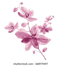 Watercolor illustration of a branch of orchid flowers with buds-1