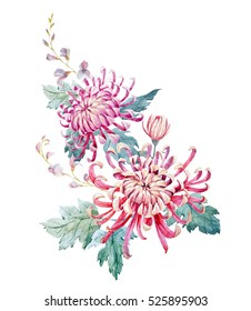 Watercolor illustration of chrysanthemum flowers.  invitation card. Asian style