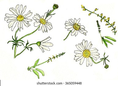watercolor illustration of daisy field