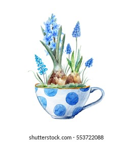 watercolor illustration of flower blue hyacinth and muscari in a cup. cute insulated spring print