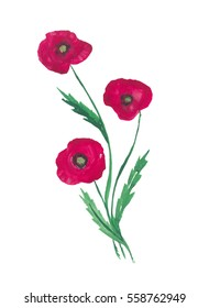 Watercolor illustration of flower poppy. Hand drawn spring design element.