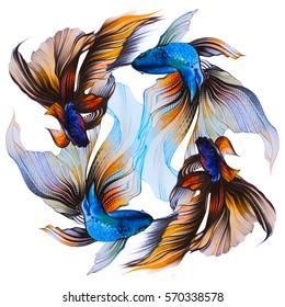 Watercolor illustration with golden fish, veiltail. Hand drawing llustration, color pencil. Graphic art. It may be used for poster, design of a t-shirt, postcard, case and bag. Tattoo design.