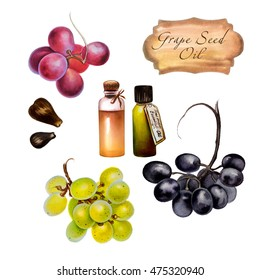 Watercolor illustration of grape seed oil. Hand painted red grape, black grape, green grape with seeds isolated on white background and oil in  glass bottles.