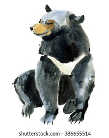 Watercolor illustration of a Himalayan bear