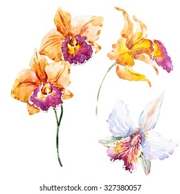 watercolor illustration of orchid, botanical art, a set of different colors of orchids, yellow orchid, white orchid