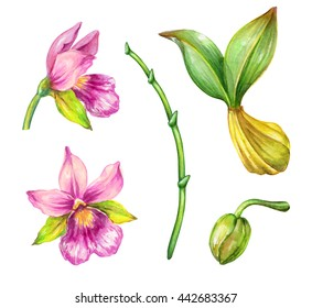 watercolor illustration, orchid flowers and green leaves, floral design elements set, isolated on white background