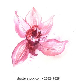 Watercolor illustration of Orchid. Hand painting. Illustration for greeting cards, invitations, and other printing projects.
