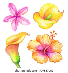 watercolor illustration, plumeria, calla lily, hibiscus, tropical yellow flowers collection, floral design elements isolated on white background