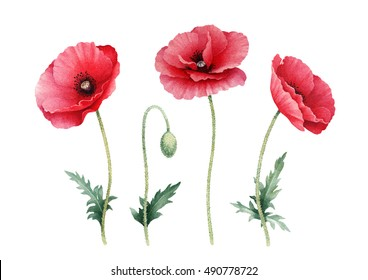 Poppy flower images stock photos vectors shutterstock watercolor illustration of poppy flowers perfect for greeting cards or invitations mightylinksfo