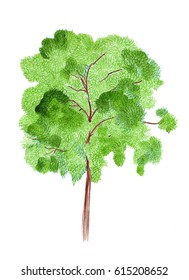 Watercolor illustration of a tree with a branching crown falls off and leaves traced