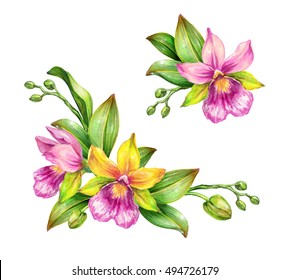 watercolor illustration, tropical orchid flowers, green leaves, closed buds, floral composition,  design elements set isolated on white background