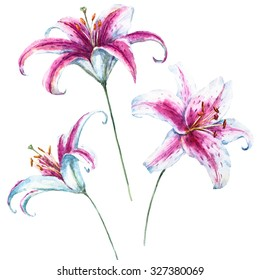 watercolor illustration of a white water lily, botanical painting, beautiful light lily, pink daylily