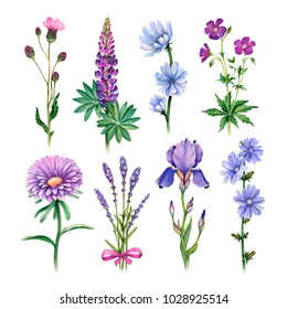 Watercolor illustrations of blue and purple flowers