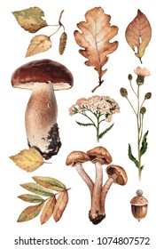Watercolor illustrations of mushrooms, leaves and flowers