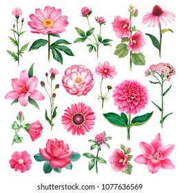 Watercolor illustrations of pink flowers