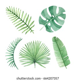 Watercolor illustrations of tropical leaves