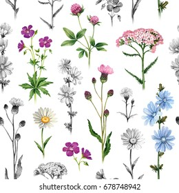 Watercolor illustrations of wild flowers. Seamless pattern