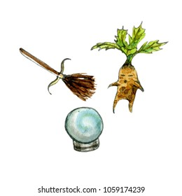 Watercolor and ink illustrations set of broom, mandragora and prophecy. Hand drawn objects.