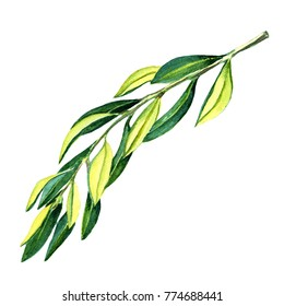 Watercolor leaves on white background
