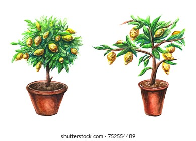 Watercolor lemon trees isolated on white background. Lemon citrus trees with yellow lemons in the pot. Hand painted objects