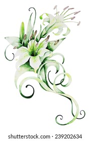 Watercolor lilies. Hand-drawn illustration