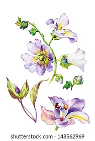 Watercolor mallow flowers and orchid