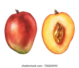 Watercolor mango pair. Hand drawn illustration in high resolution.