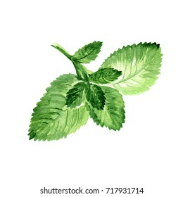 Watercolor Mint Leaves. Hand Drawn Illustration Organic Food Vegetarian Ingredient