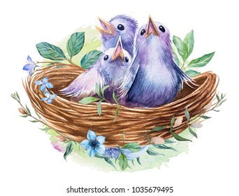 Watercolor nest with bird eggs. Hand drawn illustration