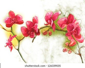Watercolor  Orchid