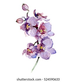 Watercolor orchid bouquet isolated on white background.