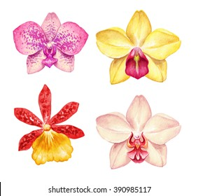 watercolor orchid flowers isolated on white background. Floral illustration, tropical clip art