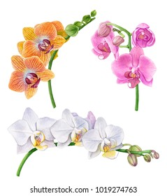 Watercolor orchid flowers.  Yellow, pink and white orchid branches. Beautiful flowers isolated  on white background.