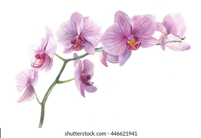 Watercolor orchid. Hand drawn branch with pink flowers isolated on white background. Realistic botanical illustration. Floral art