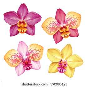 watercolor orchids, tropical flowers, botanical clip art, illustration of assorted flowers isolated on white background
