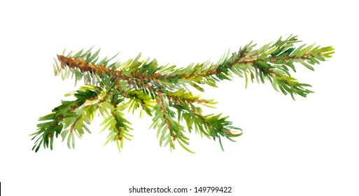 Watercolor painted pine branch
