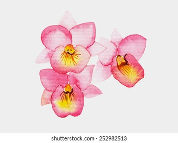 Watercolor painted of pink orchid flower , isolated