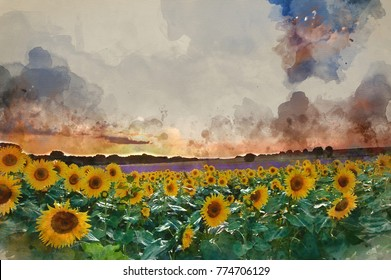 Watercolor painting of Blue sky landscape of Summer sunset sunflower field