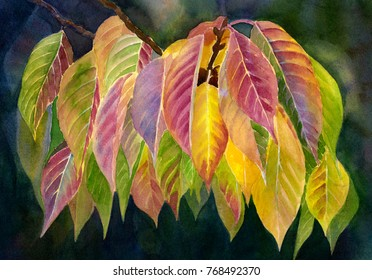 Watercolor Painting of colorful fall leaves with a dark background