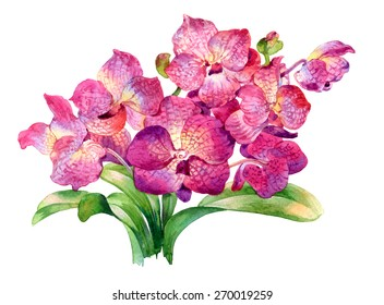 watercolor painting of flower on white background