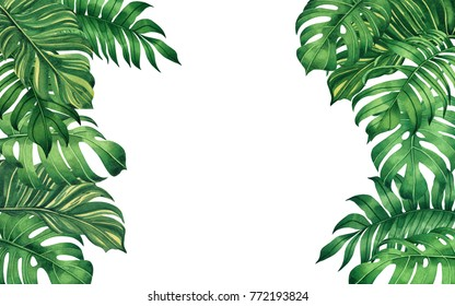 Watercolor painting frame green leaves,palm leaf isolated on white background.Watercolor hand painted illustration tropical exotic leaf for wallpaper vintage Hawaii style pattern.Tropical leaf frame.